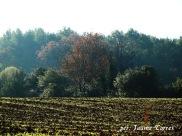 Camí de Can Borrell a Sant Cugat del Vallès 1
