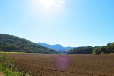 Campo sembrado en La Garrotxa