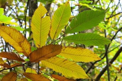Más hojas