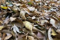 hojas sobre el suelo