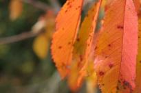 Detalle hojas