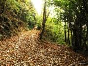 camino a Riera de Ciuret