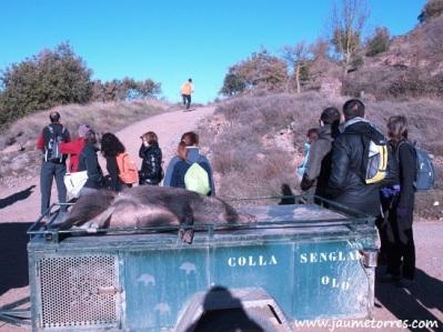 Porc senglar recien cazado