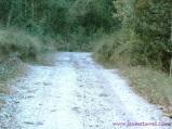 Camino nevado en L'Estany