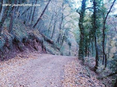 Camino del Estany