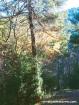 Árbol camino Estany