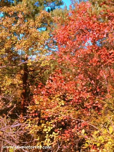 Colores de otoño en el Estany