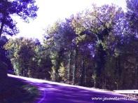Curva en la carretera C59