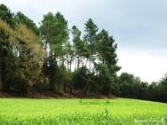 La Vall d'Olzinelles 1