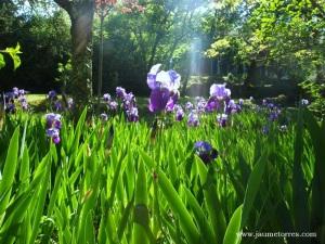 Loubressac - flores