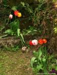 Cardaillac - flores
