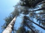 Lac des Montagnès - árboles