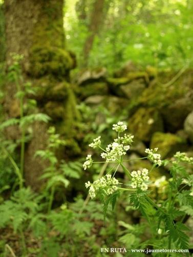 Detalle flores y musgo