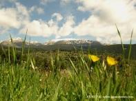 Prado divisando Tossa Plana de Lles