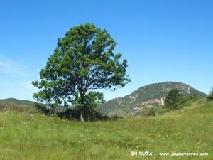 Árbol solitario (Estana)
