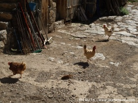 Gallinas en patio casa