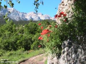 Detalle flores camino en Estana