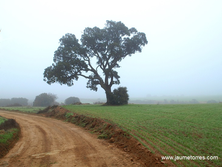 ruta-pleta-jaumetorres-01